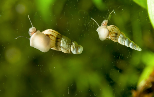 A tank that's heaving with snails could indicate a lack of maintenance.