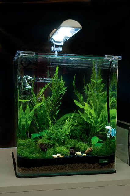 Nano Dennerle Cube Fishkeeping Review Practical vfbY76gy