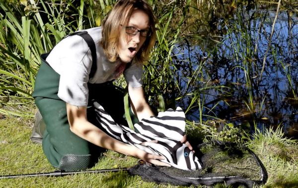 Is this the world's biggest Zebra plec?