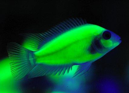 The 10 Worst Man Made Fish Practical Fishkeeping