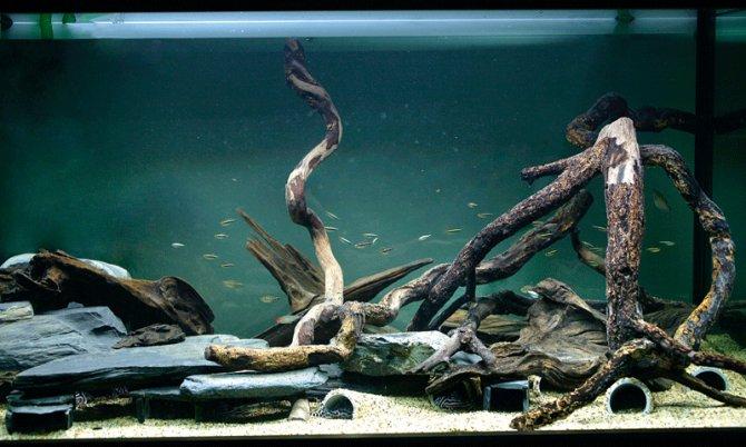 Inspirational aquariums: Zebra plec breeding set-up - Practical