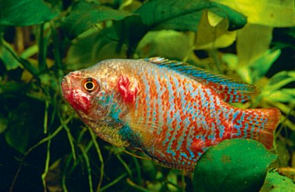 Should you be worried about fish TB? - Practical Fishkeeping
