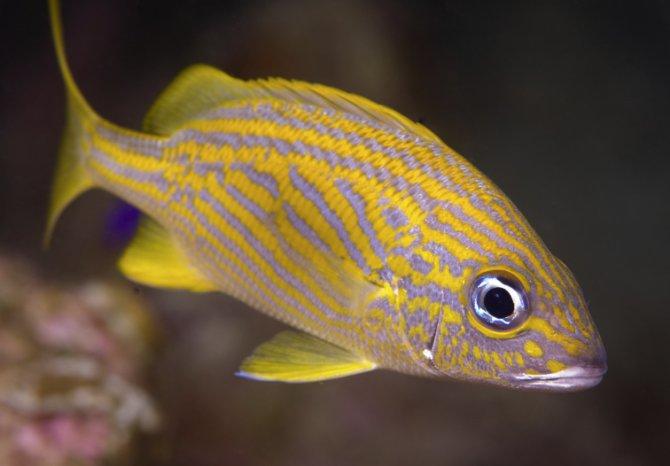 100 fish die at aquarium following parasite treatment ...