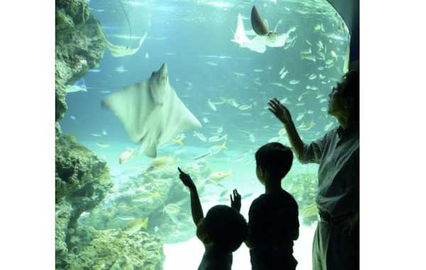 The Lagoon exhibit at Sunshine Aquarium had been home to around 1300 fish.