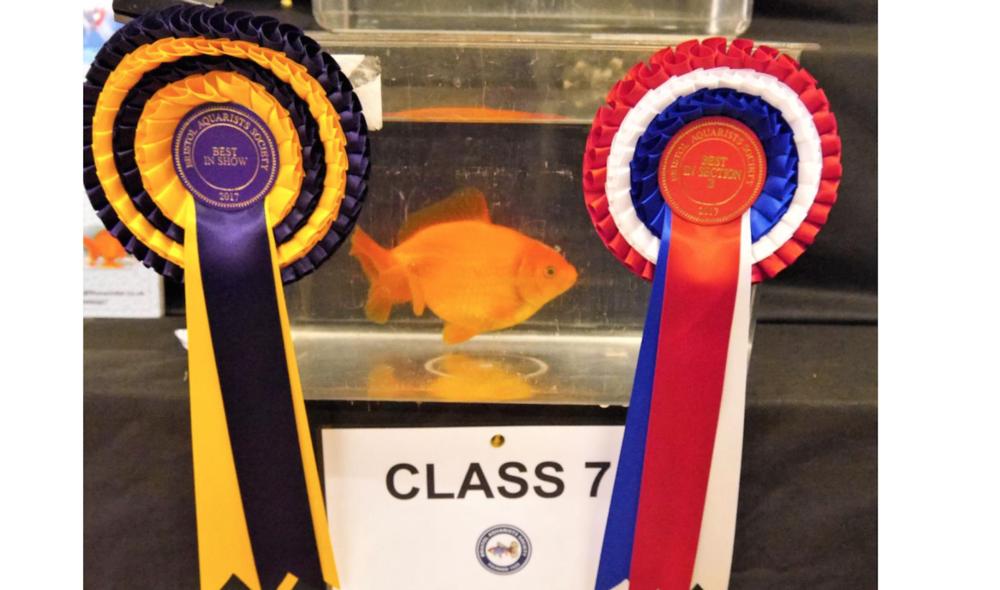 Bob Jones' winning goldfish.