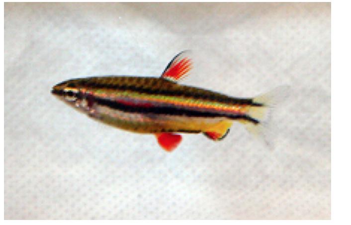 The 2016 winning fish.