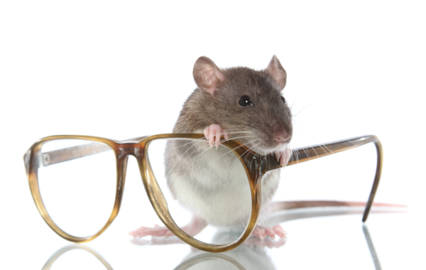 Rats have been subjected to tests on LED lighting.