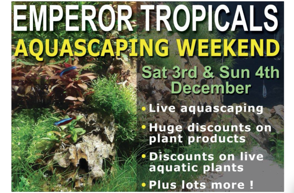 Aquascaping Event At Award Winning Devon Store Practical Fishkeeping
