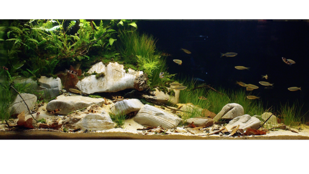 The winning aquarium by Petra Bašić from the 2013 BADC finals.