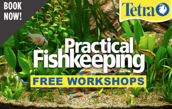 Book your place at a free fishkeeping workshop in London this September!