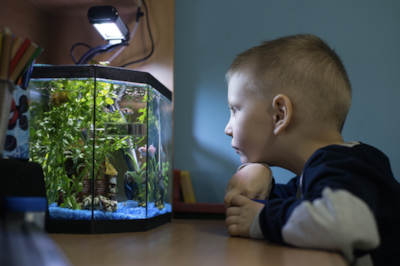 The most common age for stress in children is between nine and 11-years-old, coinciding with exams in year six. Keeping fish helps to create a calming atmosphere and even boosts development at school!