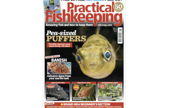 The May issue of Practical Fishkeeping comes with a FREE 16-page pull-out guide to keeping Koi.