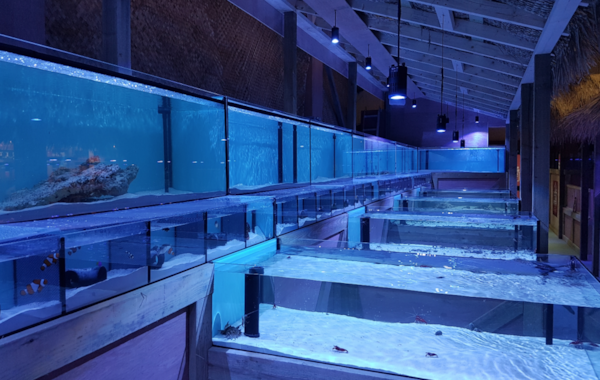 Salty Revolution opened its doors just a few weeks ago, and now carries up to 500 marine fish in stock at any one time, along with hundreds of corals.