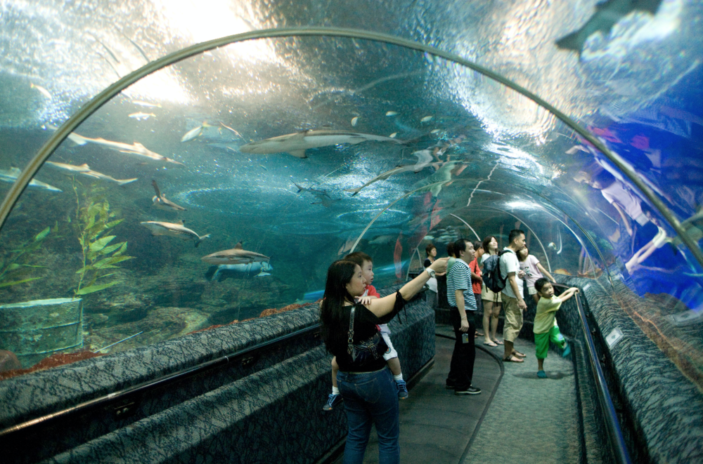 Visitors walk through the tunnel at Underwater World in Singapore, before its closure in June this year. Image by Alamy.