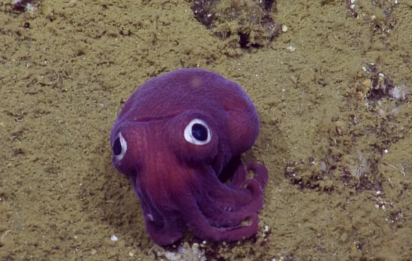 Check out those amazing eyes! Image EV Nautilus/YouTube