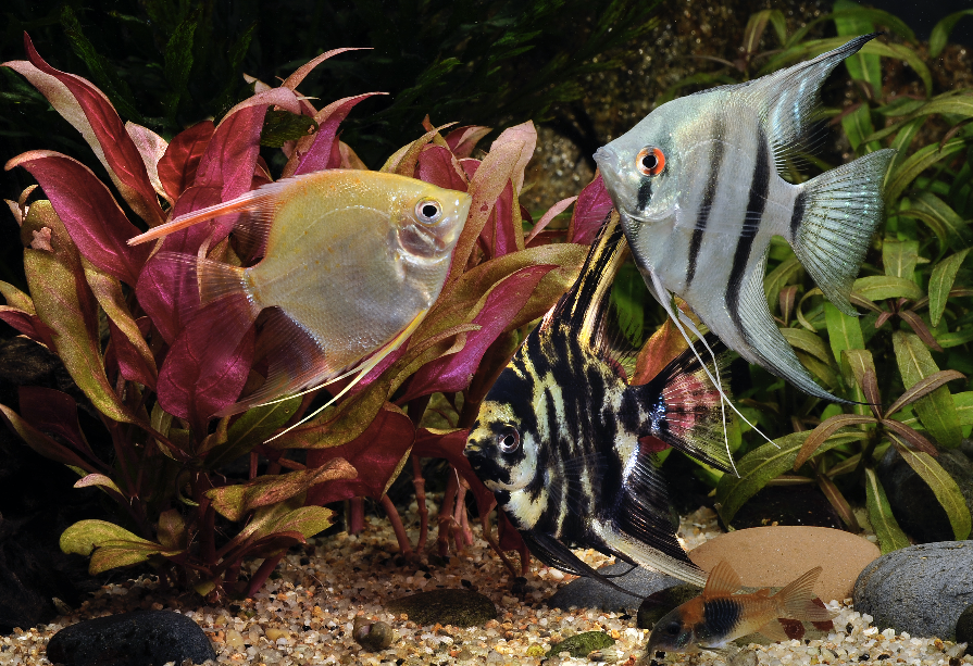 Sweet and innocent — or just waiting until you go out of the room before they give their tank mates a hiding?