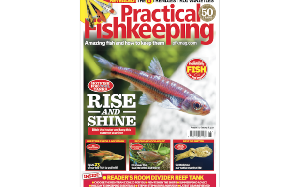 Did you know you can now buy single issues of Practical Fishkeeping online, at no extra cost — postage is free if you live in the UK?  Buy the latest issue today!