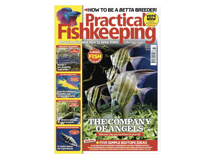 Don't miss the July issue of Practical Fishkeeping — on sale now!