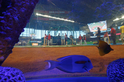 A view from one of the fish tanks at Marlin Park.