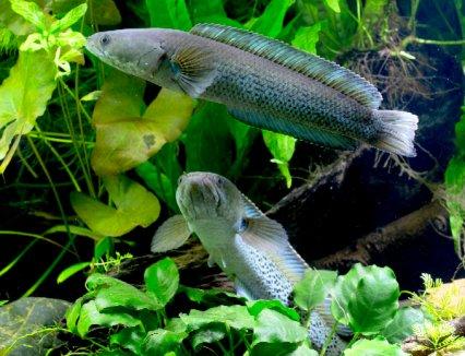 Your tanks: Paul Jones, 'snake' charmer - Practical Fishkeeping