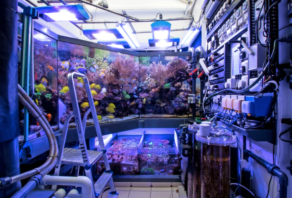 The 'wet room' at the back of the tank houses most of the equipment — and even from this side the aquarium looks amazing.