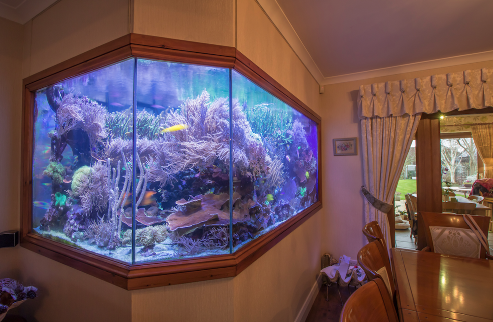 Martin's reef tank cost him a whopping £60,000 – but for that he's got the tank of his dreams, and it's still less than half the cost than was reported in the media!