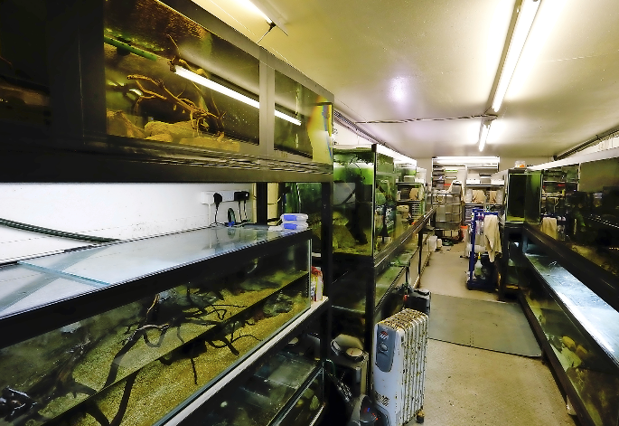 Being surrounded by fish all day at an aquatic shop has not diminished Sean's love of the hobby — far from it, in fact!