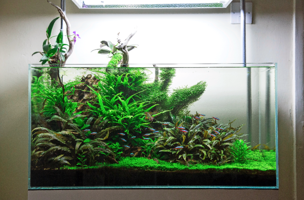 We can hardly believe that a fishkeeper with this kind of aquascaping talent has remained undiscovered for so long! Image by Kris Oddy.