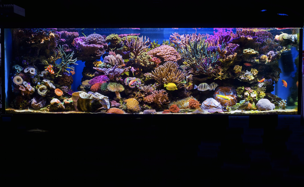 Paul's system is only three years old, but the ancestry of some of the corals it contains can be traced back 20 years or more.