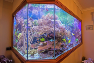 Martin Lakin's amazing 5000 l reef tank has ten sides and can be viewed from three rooms of the house. Scroll down for a video of this stunning set-up.