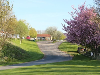 The entrance to the park is lined with trees and blossom