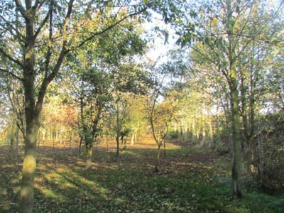 Rutland has a large dog walking area