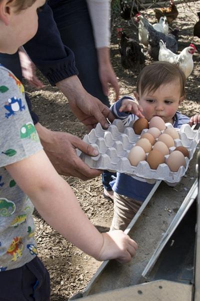 Free range chickens on site