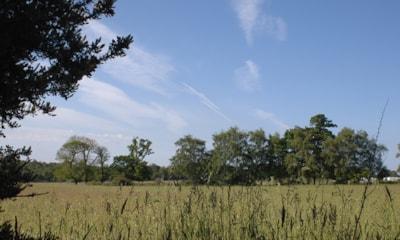 Harrow Wood