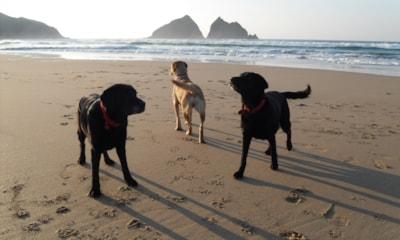 Dog-friendly Trevornick