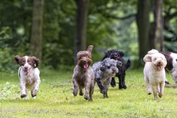 WIN! - a top weekend for you and your dog