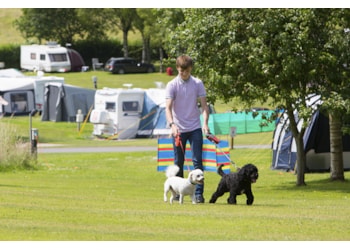 The best campsites for dogs