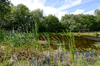 TV conservationist opens new wildlife pond at Norfolk Premier Park