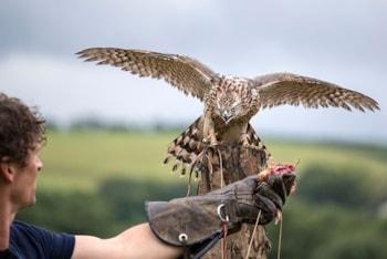 New British Bird of Prey Centre at National Botanic Garden of Wales