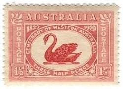 Australia-Swan-min-18886.jpg