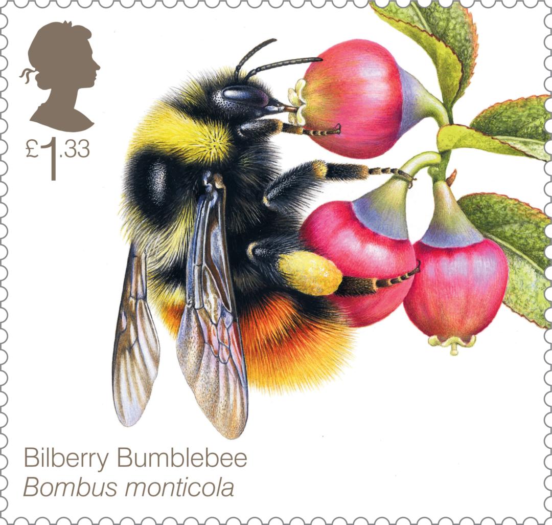 Bees-Bilberry-Bumblebee-79724.jpg