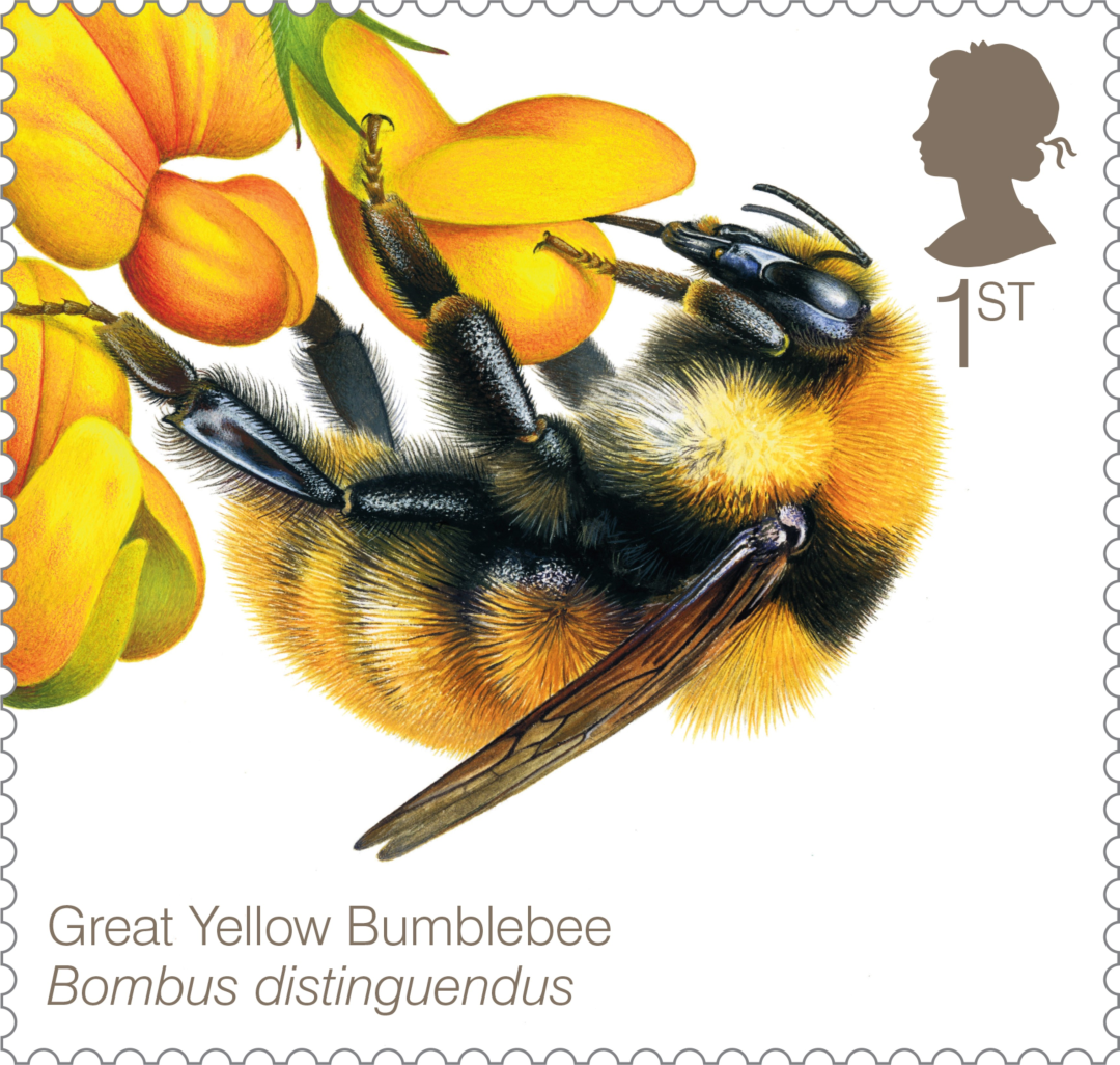 Bees-Great-yellow-Bumblebee-61740.jpg