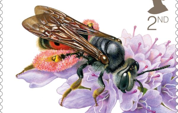 Bees-Scabious-Bee-58521.jpg