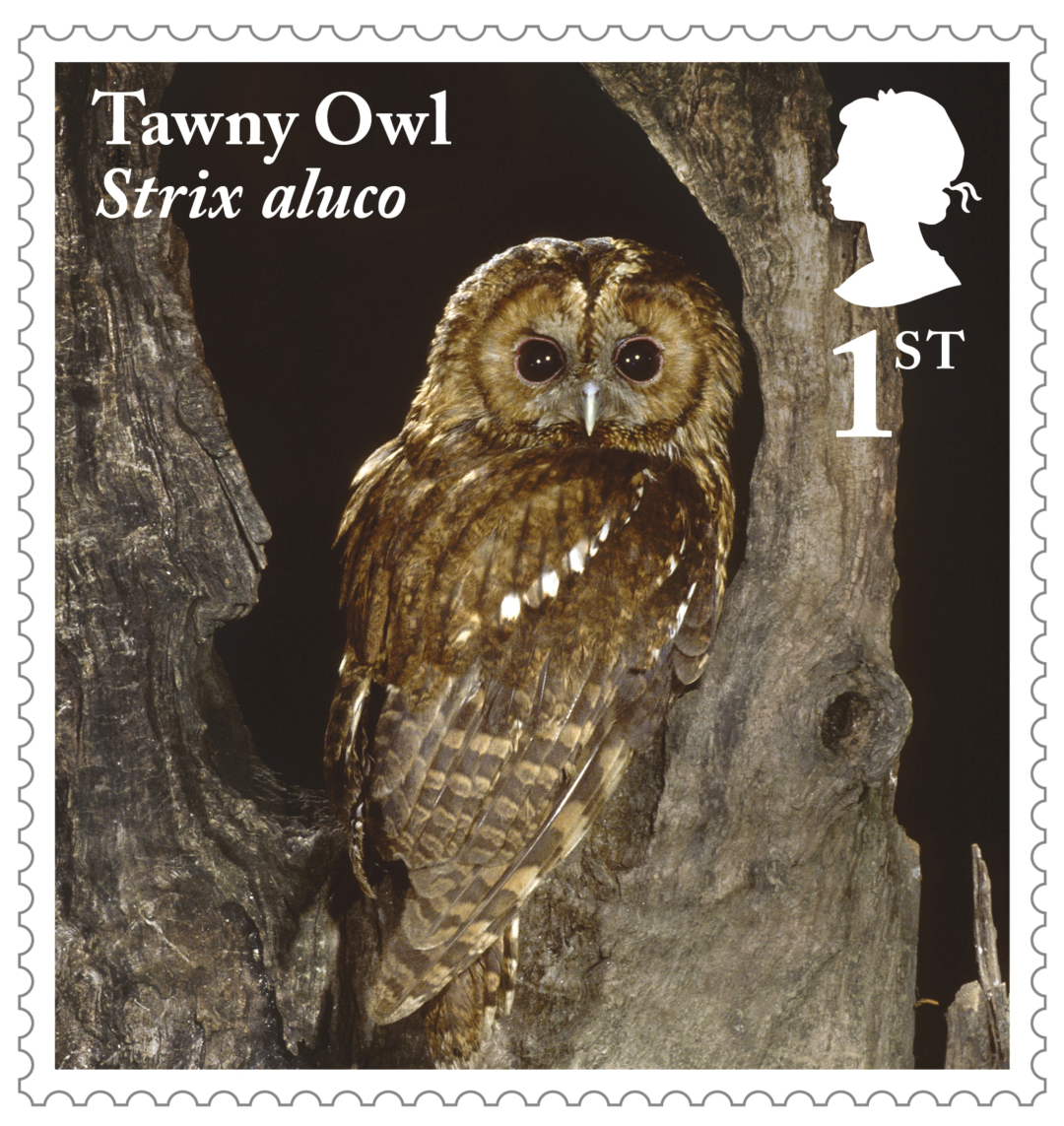 2018 Owls Set of Ten Royal Mail Postcards PHQ