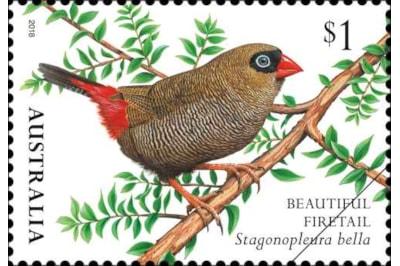 finches-of-australia-ii-beautiful-firetail.png.auspostimage.500-0.low-95917.jpg