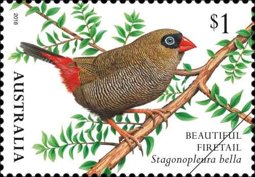 finches-of-australia-ii-beautiful-firetail.png.auspostimage.500-0.low-95917.jpg