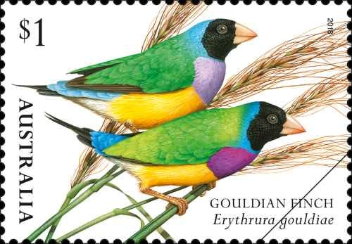 finches-of-australia-ii-gouldian-finch.png.auspostimage.500-0.low-03293.jpg