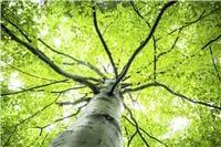 Does Making Paper Destroy Forests