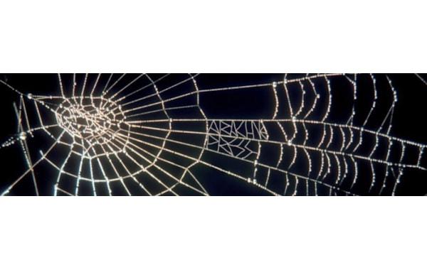 arachne-31177.jpg