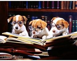 cute-dogs-29567.jpg